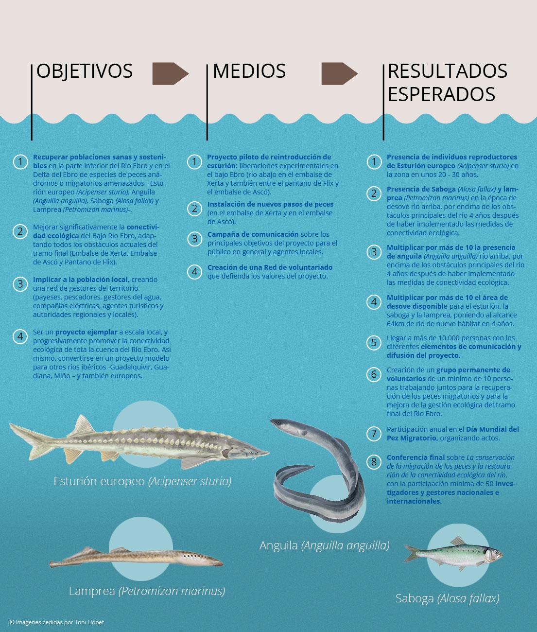 Infograf_Migrato_1_ESP